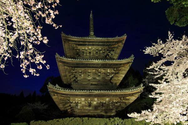 ライトアップされた三重塔と桜(三井寺)