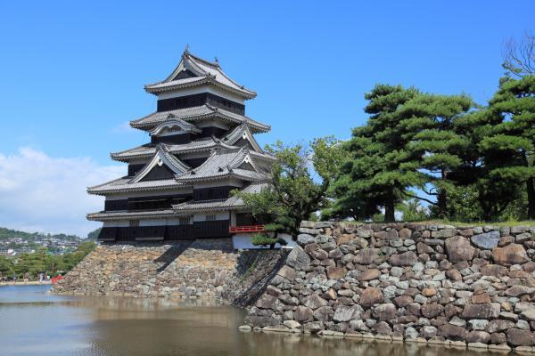 松本城と松の木