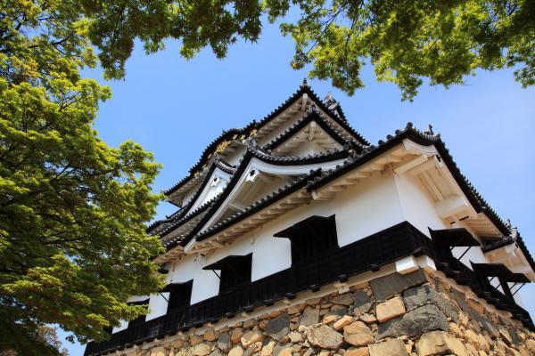 彦根城天守を見上げる