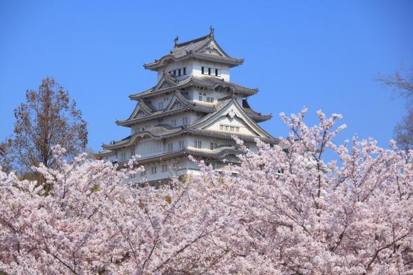 姫路城の花霞