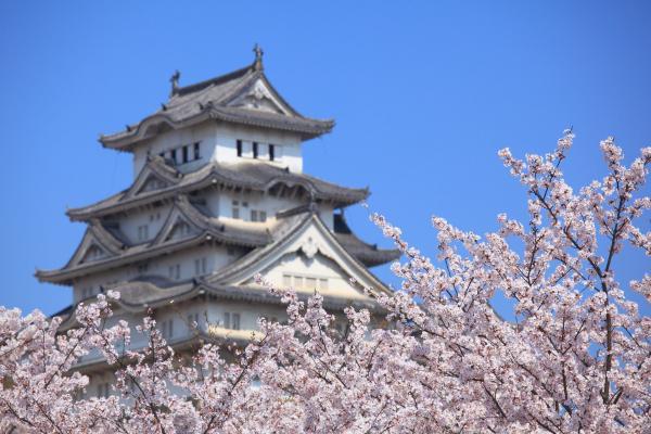 桜の彼方に姫路城