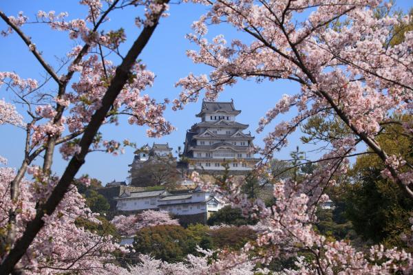 桜に囲まれた姫路城