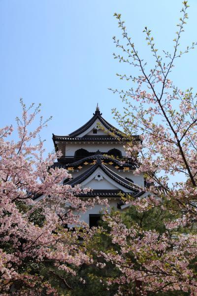桜の季節の彦根城