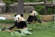 パンダ姉妹のお食事