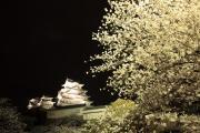 姫路城と白い夜桜
