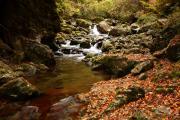 落葉の渓谷