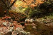 落葉の渓谷2