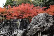 硅灰石と紅葉