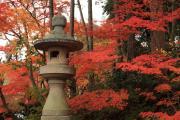 光明寺の石灯籠と紅葉