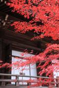 光明寺御影堂前の紅葉