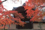 光明寺勅使門外側の紅葉