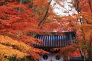 光明寺「紅葉のトンネル」と薬医門