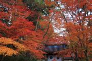光明寺「紅葉のトンネル」の出口