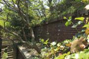 木々が生い茂り、ラピュタを思わせる友ヶ島の光景