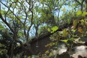 レンガの構造物に木々が生い茂る友ヶ島