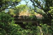 友ヶ島・木々に埋もれた構造物