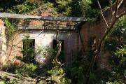 友ヶ島の発電所跡内部に生い茂る草木