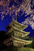 三井寺の三重塔と夜桜