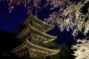 三重塔と夜桜のライトアップ(三井寺)