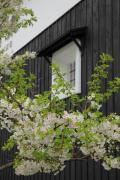 歴史ある黒壁と桜