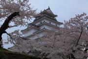 桜咲き誇る鶴ヶ城