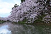 弘前城の堀と桜