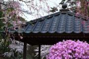 弘前公園、春の花々
