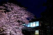 弘前城の城門と夜桜