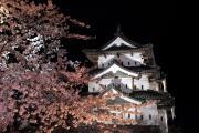 弘前城天守と満開の夜桜