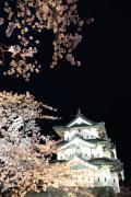 弘前城、夜空を彩る桜