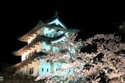 仰ぎ見る夜桜の弘前城