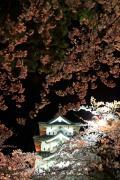 夜の弘前城に降り注ぐ枝垂れ桜