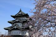 現存十二天守、弘前城と満開の桜