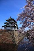 弘前城、青空と満開の桜