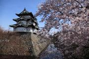 桜の名所、弘前城の天守閣