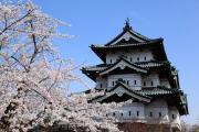 満開の桜と弘前城天守閣