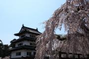 満開の桜と現存十二天守の弘前城