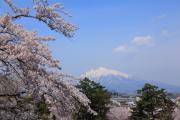 岩木山と咲き誇る満開の桜
