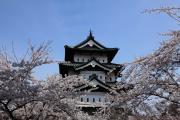 弘前城天守を彩る満開の桜