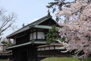 弘前城城門と満開の桜