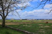 桜咲くのどかな田園風景
