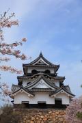 桜と彦根城天守正面