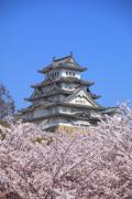 桜の向こうの姫路城