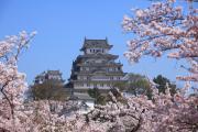 桜越しの姫路城