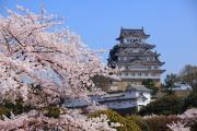 桜満開の姫路城