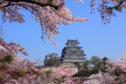 春色の姫路城