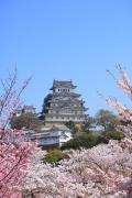桜と青空と姫路城