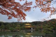 金閣と鏡湖池の紅葉